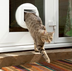 Cat Flap Installation Long Crednon